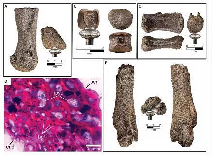 化石证据颠覆传统认知:恐龙能够在北极生存和繁殖
